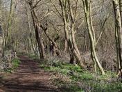 My favourite walk