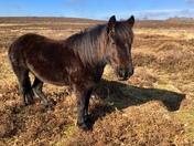 Pony shadow