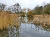 LAKE AT PENSTHORPE NATURAL PARK