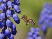 Spring Nectar Bar