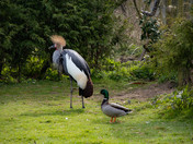 Pensthorpe Crane