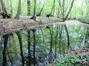 Whomerley Wood Moat Bedwell Stevenage