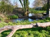 Quaker Wood Diss