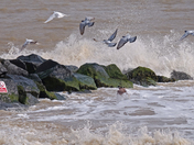 Felixstowe waves