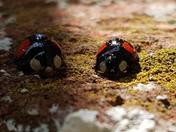 Lady bug love