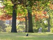 Scene in Valentine park
