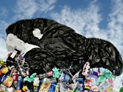 plastic pollution harming the ocean