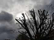 Cloudy before rain