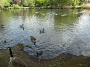 New arrivals in Valentine park Ilford
