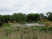 Boadmans Farm water garden.