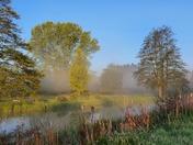 Beautiful Falcon Meadow