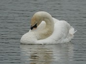 Wildlife at Thorpeness Meare