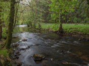 Spring time on the river Teign