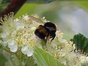 Wonderful bees
