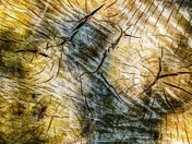 Project 52, Abstract