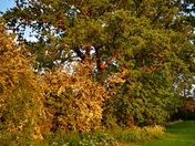 Relaxing in Quaker wood Roydon Diss