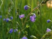 Flowers in Quaker wood Roydon Diss