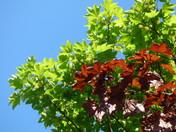 Vibrant sunny leaves