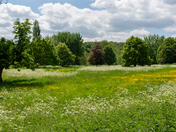 Meadow at Chelsworth, Suffolk