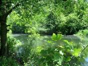 River Wensum.