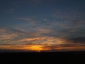 Sunrise and morning flight at Snettisham