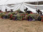 Sandringham flower show