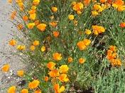 Roadside floral display