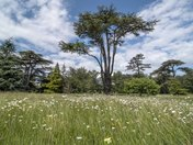 Ickworth Grounds
