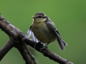 One of many fledglings