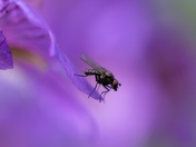 Fly amongst the flowers