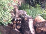Posing in a Mawneys garden