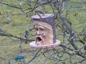 Bird nesting box in garden with no takers