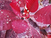 Droplets in the rain