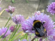 Busy Bumble Bees