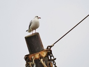 PROJECT 52, LOOK UP. GULL IN SHIPS RIGGING