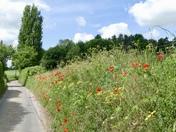 More wild flowers round Hadleigh