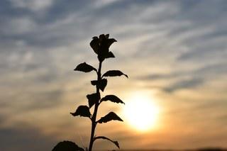 A beautiful flower rising