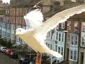 Seagull and Victorian terraces