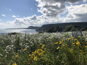 Wild flower meadow with a sea view!