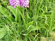 Orchids On Dinan Way
