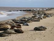 Project 52 Week 17 Norfolk Beaches
