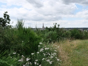 View of Norwich City from Mousehold Heath
