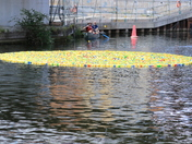 Great Norwich Duck Race 2019
