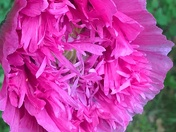 garden flowers in bloom