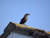 Birds feeding or waiting.