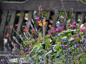Summer garden in all its colourful glory