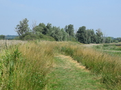 More Pictures of Oulton Marshes