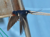 Something magical about swallows