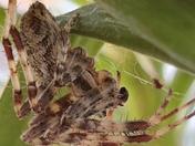 HELLO MR SPIDER