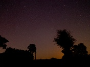 Trees in the shadows of a starry Waldringfield sky